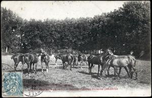 n° 25 - Souvenirs équestres : la mémoire de l'École de cavalerie