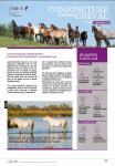Conjoncture filière cheval n°32 Septembre 2018
