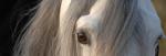 En été et dans la journée, les chevaux préfèrent les abris fermés sur 3 côtés