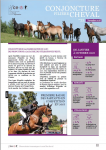 Conjoncture filière cheval n°33 Novembre 2018