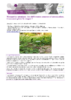 JSIE2019-2-Renaud - application/pdf