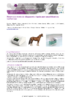 JSIE2019-p8-Thibault - application/pdf