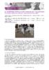 JSIE2019-1-Stomp - application/pdf