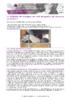 JSIE2019-4-Eyraud - application/pdf